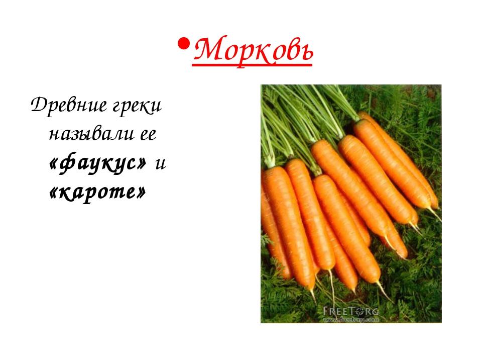 Морковь Древние греки называли ее «фаукус» и «кароте»