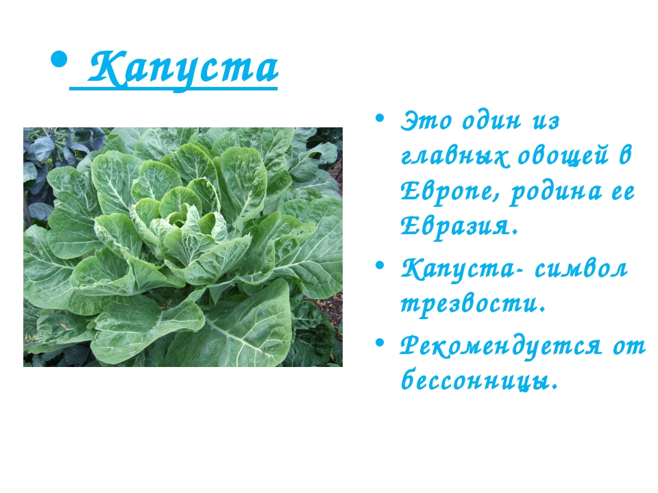 Капуста Это один из главных овощей в Европе, родина ее Евразия. Капуста- сим...