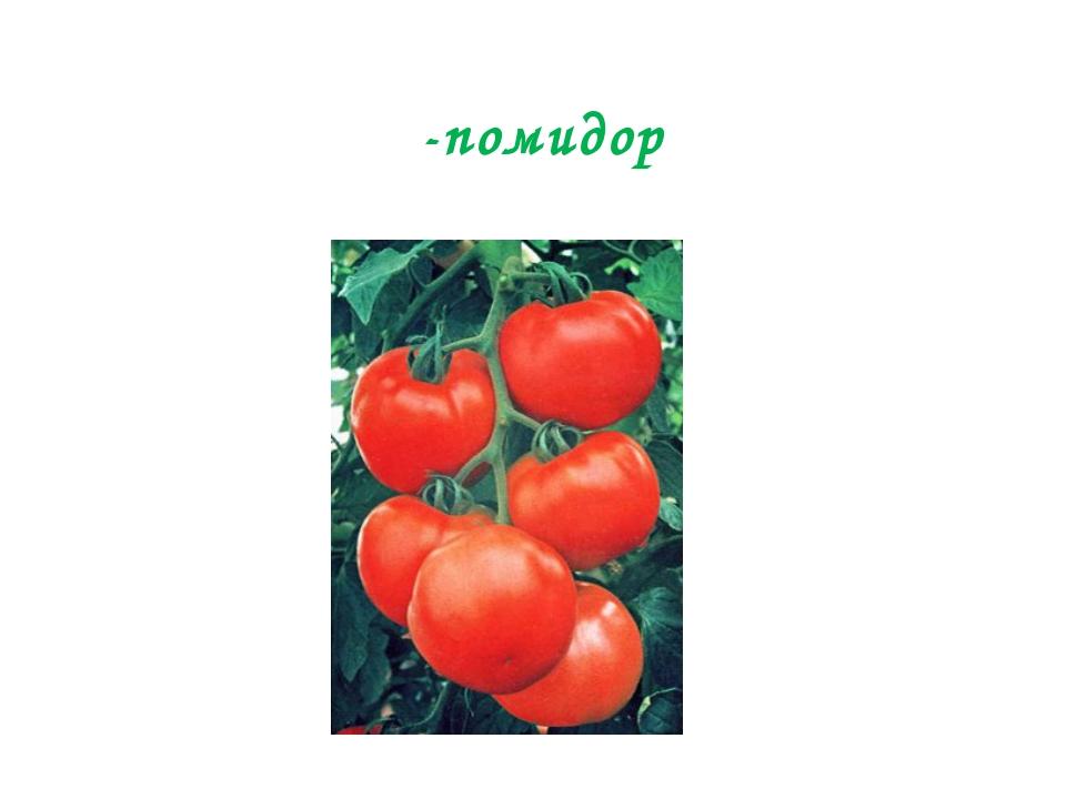-помидор