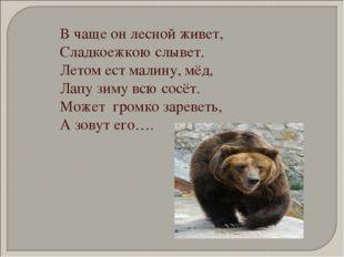 В чаще он лесной живет, Сладкоежкою слывет. Летом ест малину, мёд, Лапу зиму