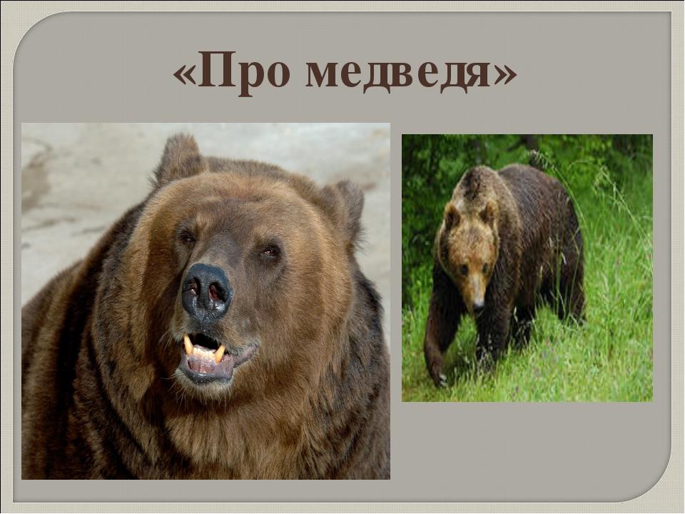 «Про медведя»