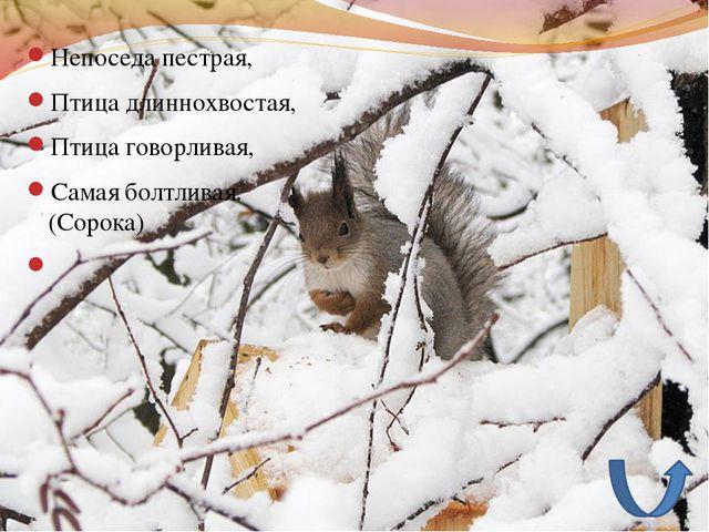 Непоседа пестрая, Птица длиннохвостая, Птица говорливая, Самая болтливая. (С...