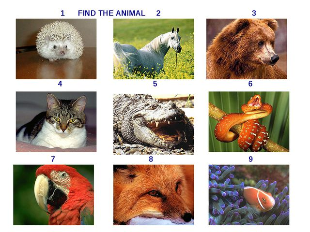 4 5 6 7 8 9 1 FIND THE ANIMAL 2 3