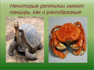 Некоторые рептилии имеют панцирь, как и ракообразные