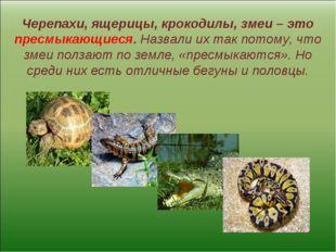 Черепахи, ящерицы, крокодилы, змеи – это пресмыкающиеся. Назвали их так потом