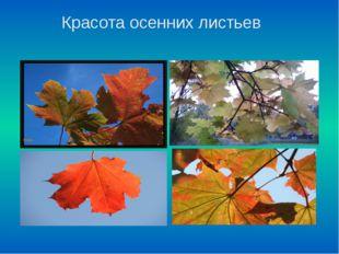 Красота осенних листьев