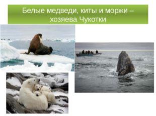 Белые медведи, киты и моржи – хозяева Чукотки