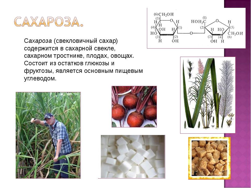 Сахароза (свекловичный сахар) содержится в сахарной свекле, сахарном тростник...