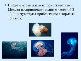 Инфразвук слышат некоторые животные. Медузы воспринимают волны с частотой 8-1