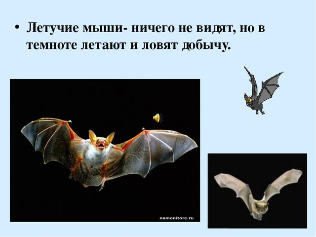 Летучие мыши- ничего не видят, но в темноте летают и ловят добычу.