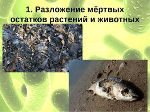 1. Разложение мёртвых остатков растений и животных