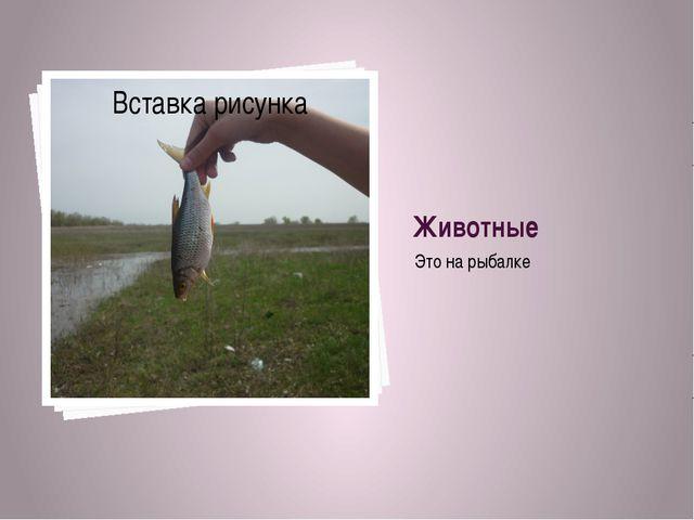 Животные Это на рыбалке