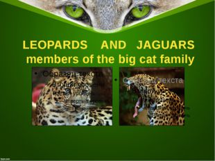 LEOPARDS AND JAGUARS members of the big cat family