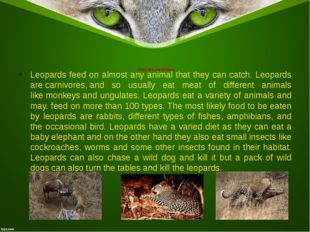 They are carnivores Leopards feed on almost any animal that they can catch. L