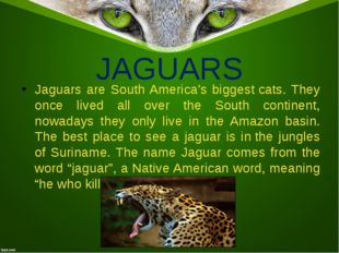 JAGUARS Jaguars are South America's biggestcats. They once lived all over th