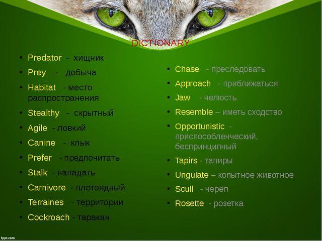 DICTIONARY Predator - хищник Prey - добыча Habitat - место распространения St...