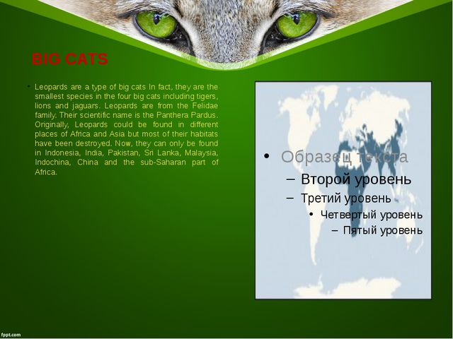 BIG CATS Leopards are a type of bigcats In fact, they are the smallest spec...