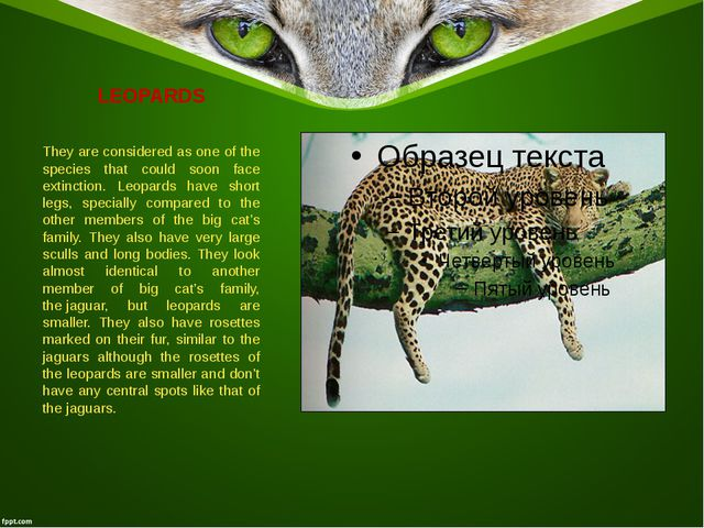 LEOPARDS They are considered as one of the species that could soon face extin...
