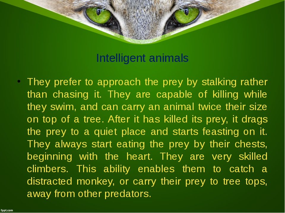 Intelligent animals They prefer to approach the prey by stalking rather than...