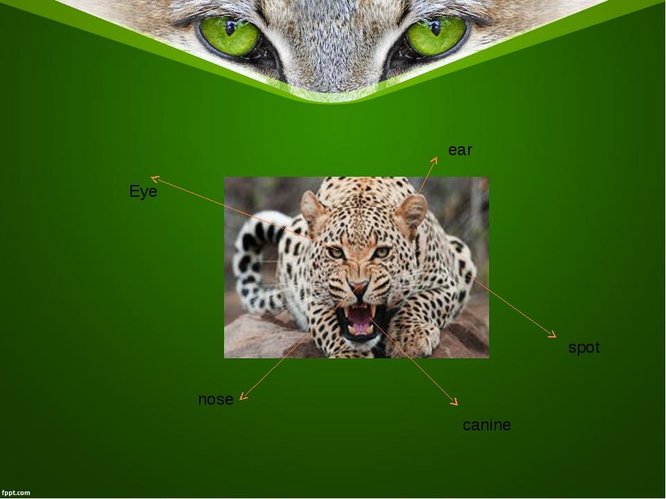 Eye ear nose canine spot