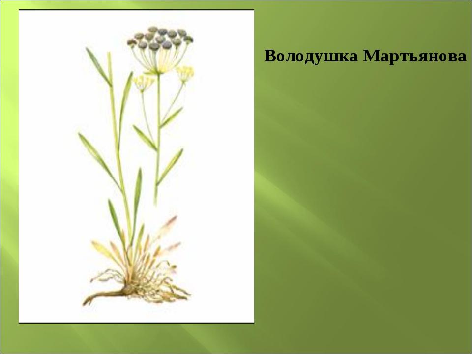 Володушка Мартьянова