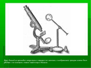 Карл Линней не признавал микроскопа и отрицал его значение, а изображения, ко