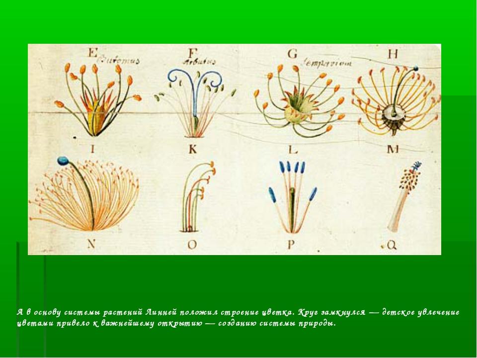 А в основу системы растений Линней положил строение цветка. Круг замкнулся —...