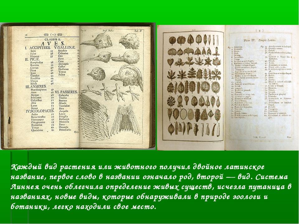 Каждый вид растения или животного получил двойное латинское название, первое...