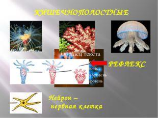 КИШЕЧНОПОЛОСТНЫЕ Нейрон – нервная клетка РЕФЛЕКС