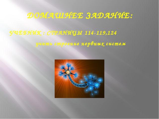 ДОМАШНЕЕ ЗАДАНИЕ: УЧЕБНИК : СТРАНИЦЫ 114-119,124 учить строение нервных систем