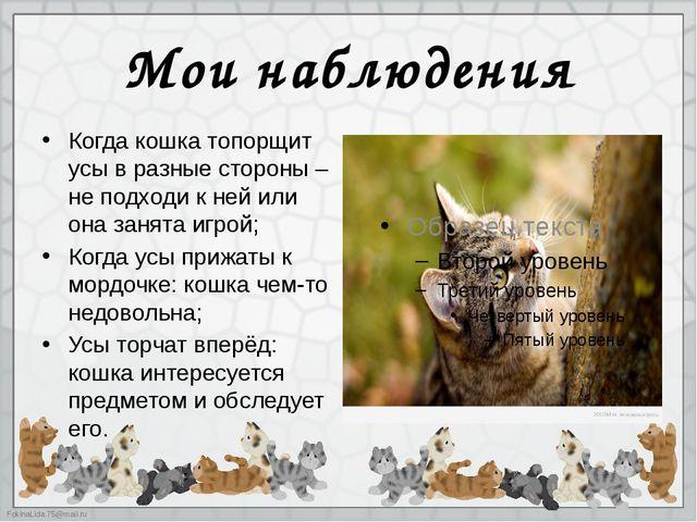 Мои наблюдения Когда кошка топорщит усы в разные стороны – не подходи к ней и...