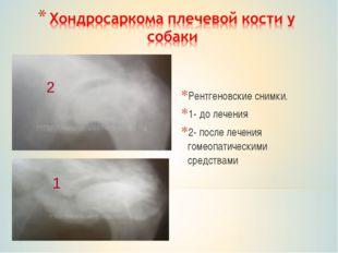 Рентгеновские снимки. 1- до лечения 2- после лечения гомеопатическими средств