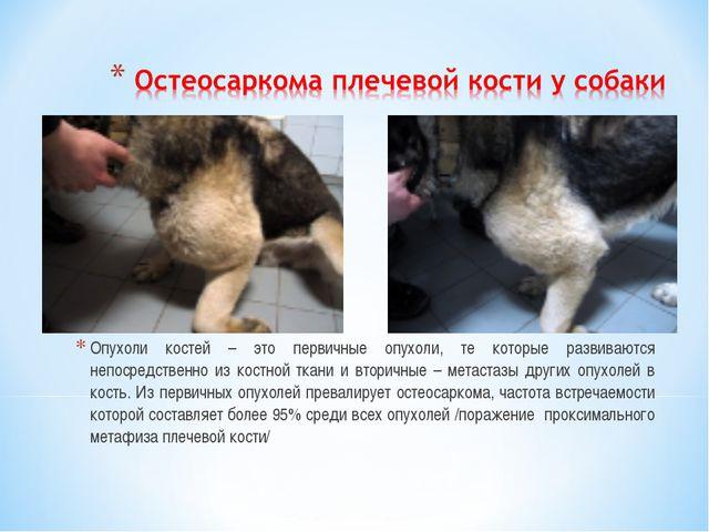 Опухоли костей – это первичные опухоли, те которые развиваются непосредственн...