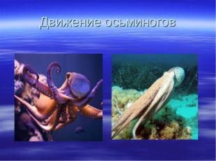 Движение осьминогов