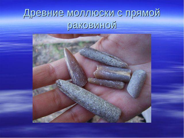 Древние моллюски с прямой раковиной