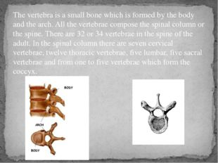 The vertebra is a small bone which is formed by the body and the arch. All th