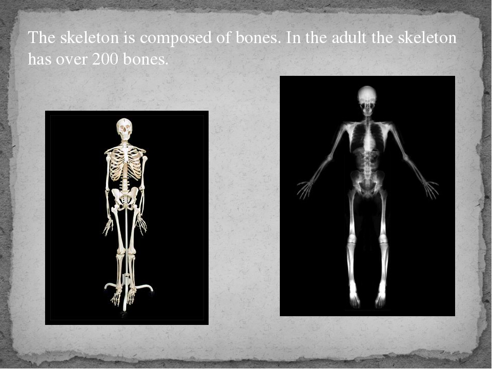 The skeleton is composed of bones. In the adult the skeleton has over 200 bon...
