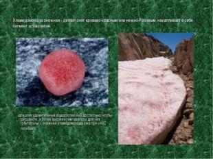 Хламидомонада снежная - делает снег кроваво-красным или нежно-Розовым, накапл