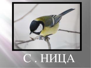 С . НИЦА