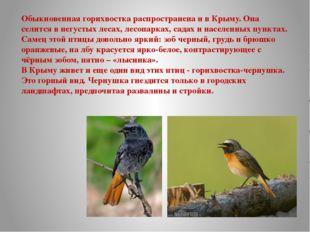 Обыкновенная горихвостка распространена и в Крыму. Она селится в негустых лес