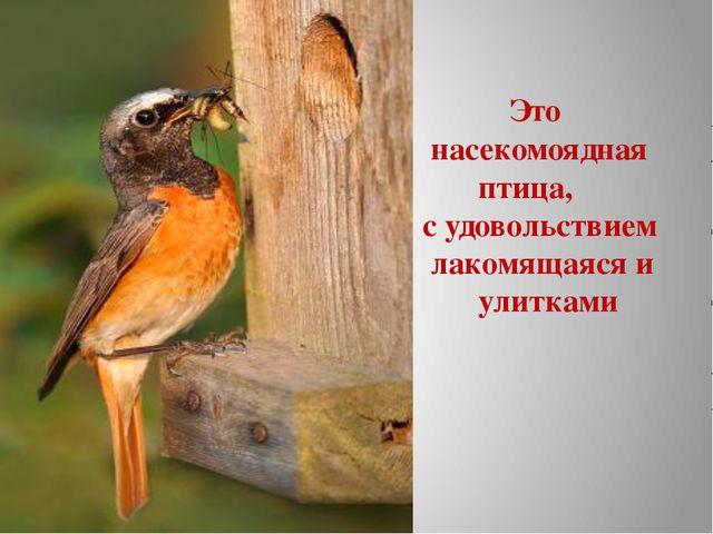 Это насекомоядная птица, с удовольствием лакомящаяся и улитками