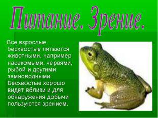 Все взрослые бесхвостые питаются животными, например насекомыми, червями, ры