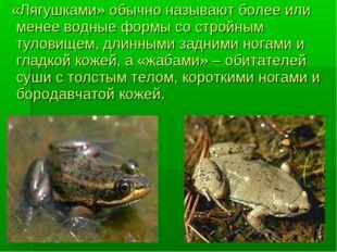«Лягушками» обычно называют более или менее водные формы со стройным туловищ