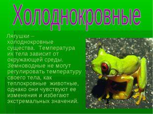 Лягушки – холоднокровные существа. Температура их тела зависит от окружающей