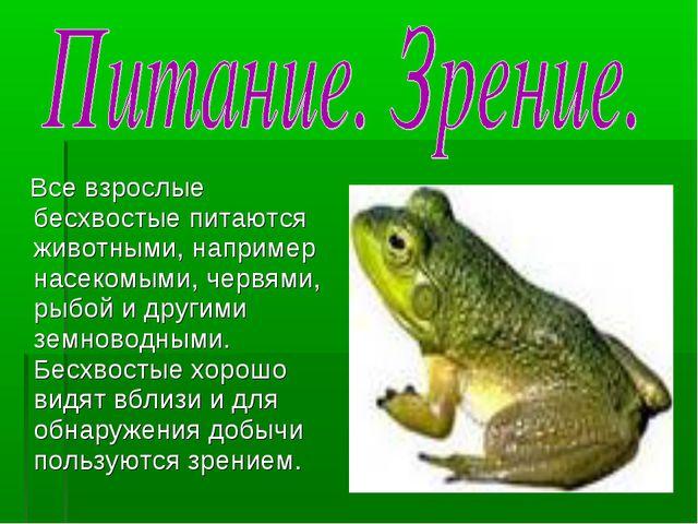 Все взрослые бесхвостые питаются животными, например насекомыми, червями, ры...