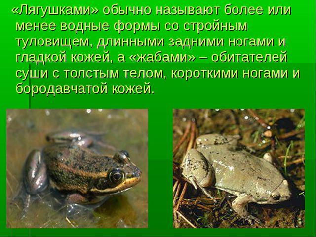 «Лягушками» обычно называют более или менее водные формы со стройным туловищ...
