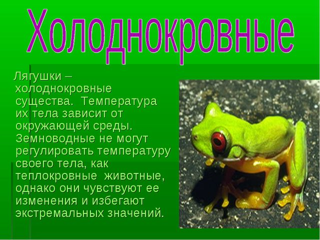 Лягушки – холоднокровные существа. Температура их тела зависит от окружающей...