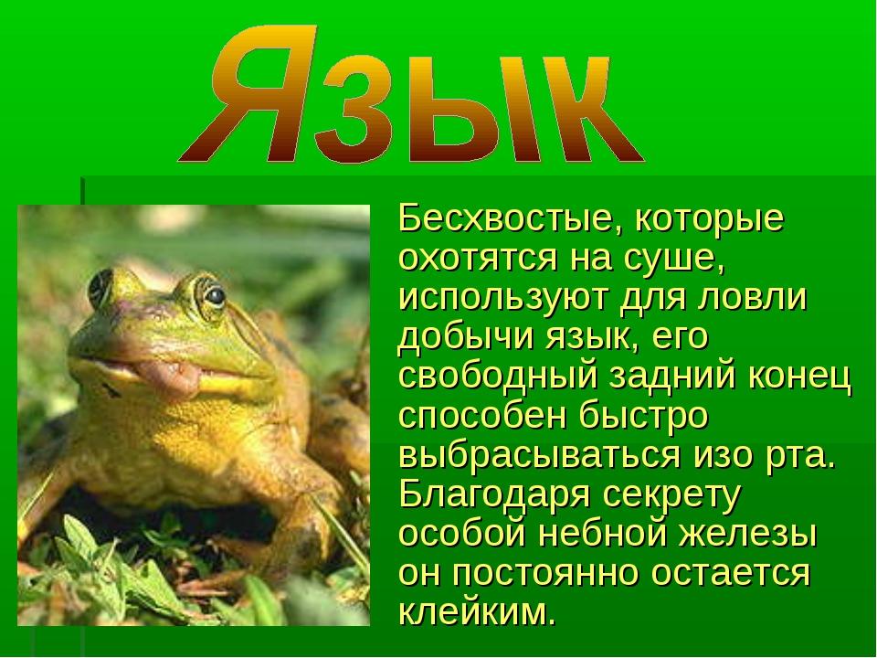 Бесхвостые, которые охотятся на суше, используют для ловли добычи язык, его...