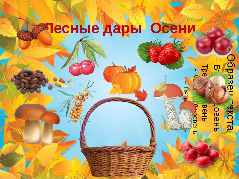 Лесные дары Осени