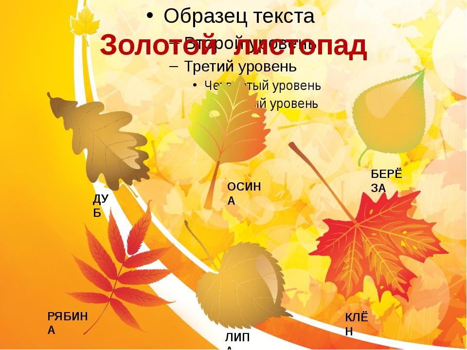 Золотой листопад ДУБ ЛИПА КЛЁН БЕРЁЗА ОСИНА РЯБИНА